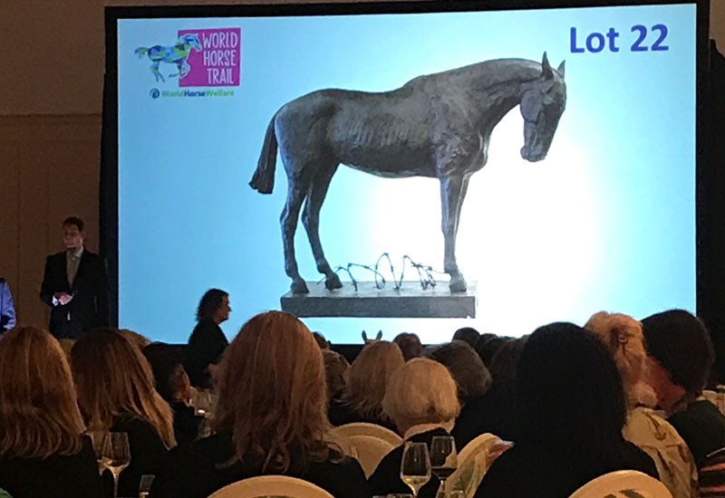 World Horse Welfare raises £100,000