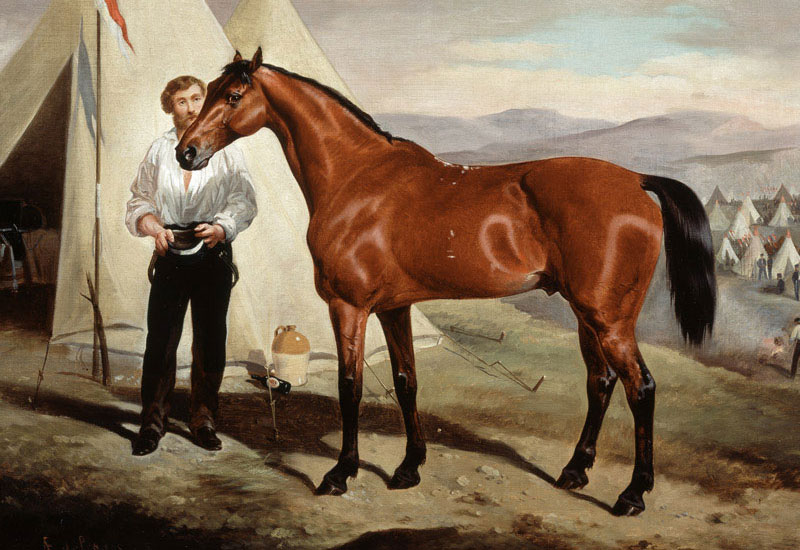 Hero Horse No 20 – Sir Briggs