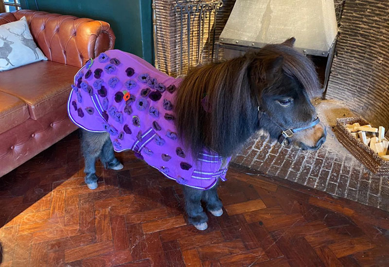 Patrick the Pony in the news