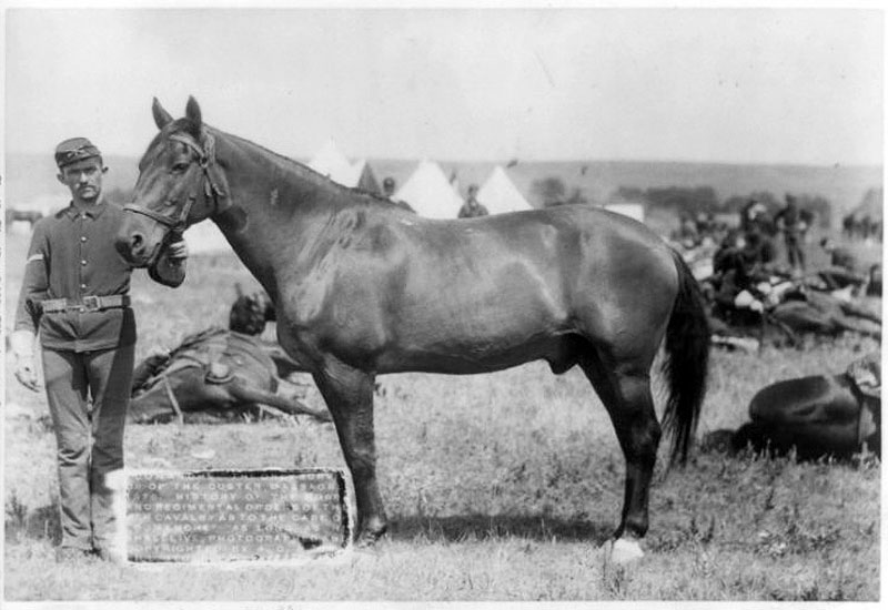 Hero Horse No 23 – Comanche