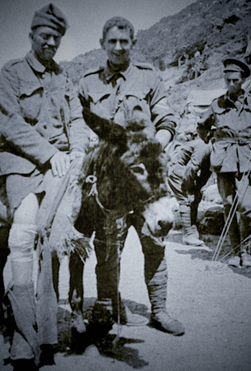 Hero Horse No 27 – Murphy the Gallipoli Donkey