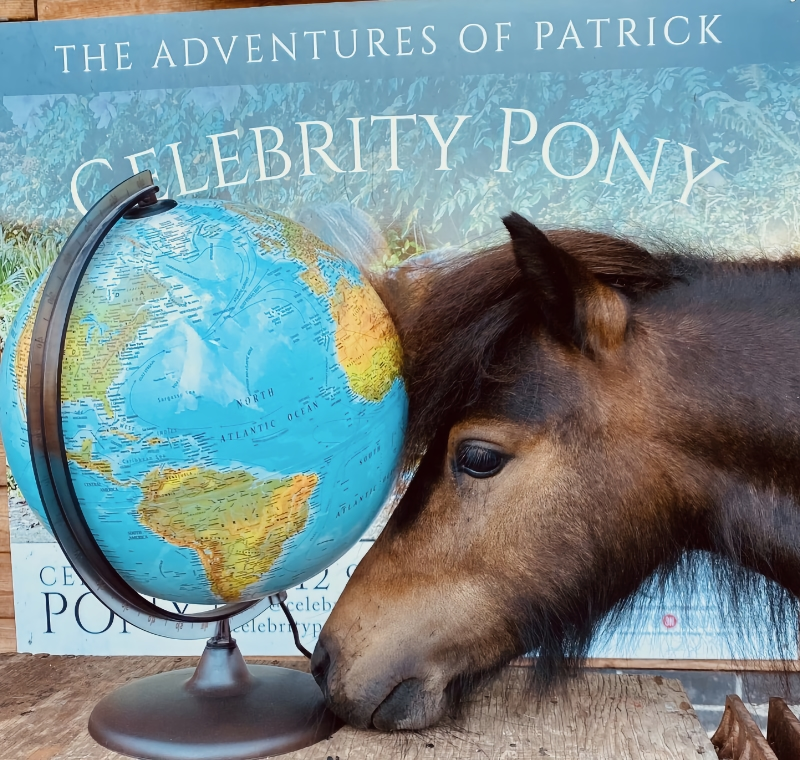 Patrick the Pony to Walk for War Horse