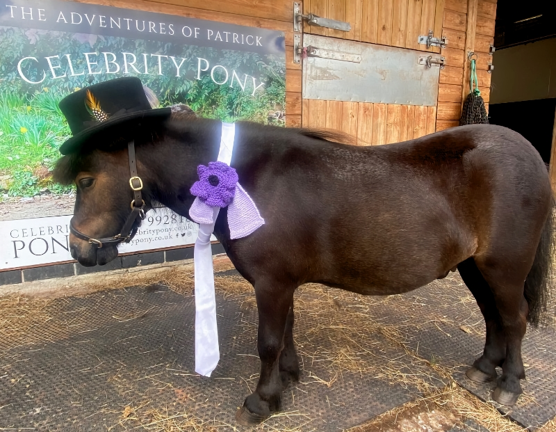 Patrick heads to Ascot for launch of first National War Animal Day